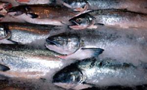 Cá hồi nuôi thả tăng đột biến thay đổi ngành công nghệ này