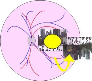 Kẽm có thể đóng vai trò then chốt trong bệnh về mắt