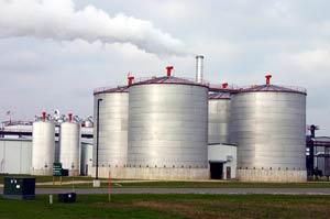Phân trâu bò - nguồn nguyên liệu quý cho nhiên liệu Ethanol