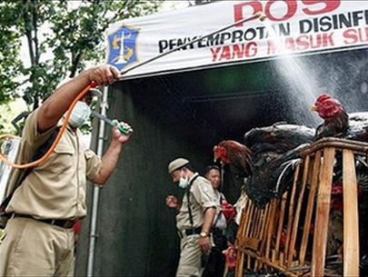 ASEAN lập kho trữ thuốc chữa cúm gia cầm