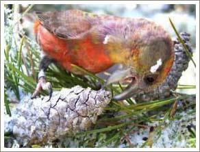 """Những loài chim mới được phát hiện ở Idaho """"Chạy đua vũ trang"""" cho quá trình đồng tiến hóa"""