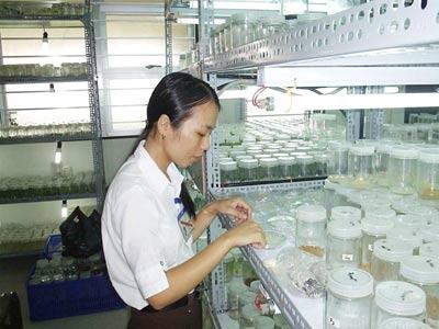 Nghiên cứu các loại giống trong phòng thí nghiệm