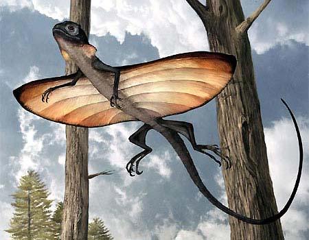 Phát hiện thằn lằn bay sống cách đây 125 triệu năm tại Trung Quốc