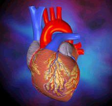 Những điều kỳ lạ của trái tim