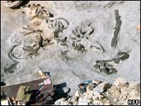 Hóa thạch cá voi tìm thấy trong vườn nho