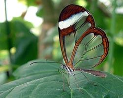 Đóng cửa đường cao tốc cho bướm di cư