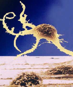 Thiên đường và rào cản của tế bào gốc phôi người
