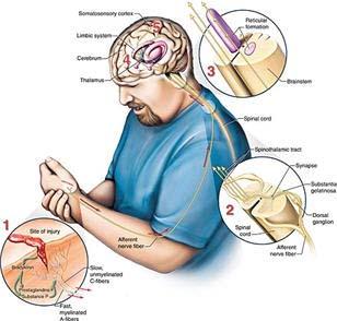 Nhìn nhận mới về cách não bộ định vị cơn đau