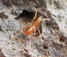 Australia: Cấm khai thác mỏ để bảo vệ nhện