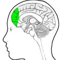 Nhận dạng vùng não lưu trữ ký ức xã hội
