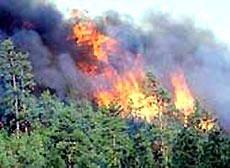 Siết chặt công tác phòng chống cháy rừng