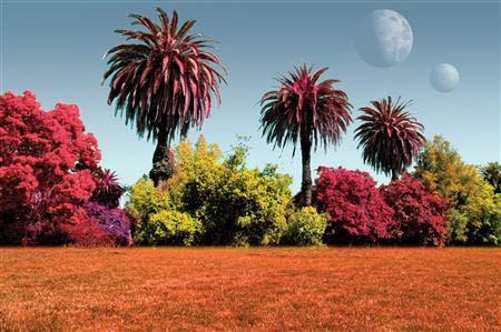 Trên các hành tinh khác, cây có thể đỏ hoặc vàng