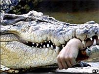 Nối tay bị cá sấu cắn đứt lìa