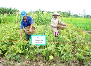 Cải thiện độ phì nhiêu của đất thâm canh lúa - Những giải pháp triển vọng
