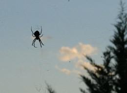Khi nào thì nhện bay?