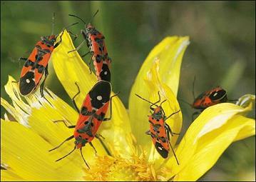 Canada khai mạc triển lãm nghệ thuật côn trùng