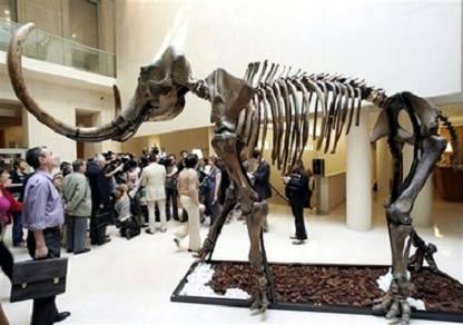 Paris: Đấu giá bộ xương ma mút 15.000 năm tuổi