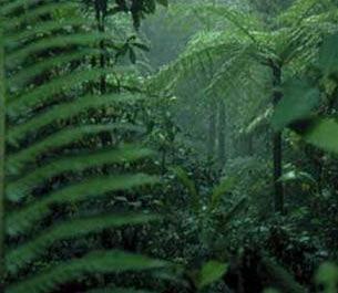 1/2 thực vật toàn cầu có nguy cơ tuyệt chủng