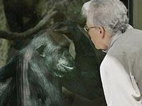 Vườn thú Antwerp: Không được nhìn thẳng vào mặt tinh tinh