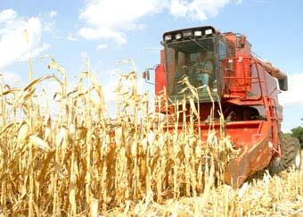 Bùng nổ nhiên liệu sinh học và vấn đề thiếu lương thực trên thế giới
