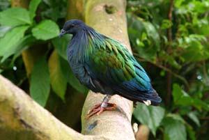 Các loài bay ở Côn Đảo (Phần cuối)