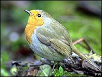Ô nhiễm tiếng ồn, chim phải hót về đêm
