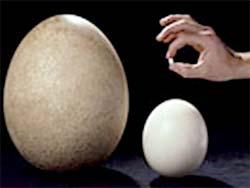 Những kỷ lục của trứng