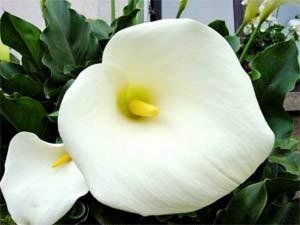 Bảo quản hoa