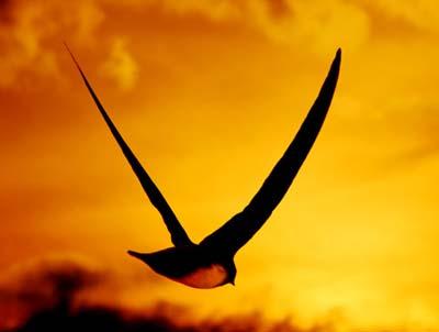 Chim én bay: Mô hình cho máy bay hiện đại