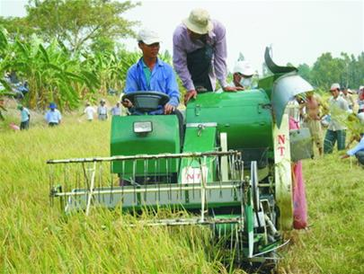 Đồng Tháp: khuyến khích nông dân dùng máy gặt đập