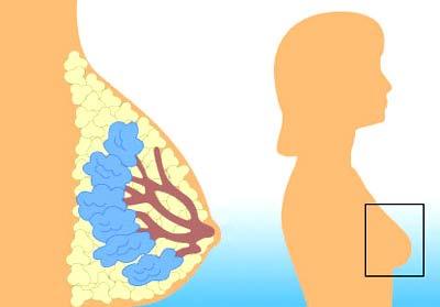 Nghiên cứu ung thư: Mô hình mới, không cần thử trên chuột