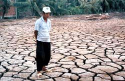 Hạn hán trên diện rộng do hiện tượng El Nino