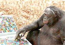 """Những """"bậc thầy"""" giao tiếp trong thế giới động vật"""