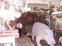 Ra mắt Bảo tàng Thiên nhiên Việt Nam