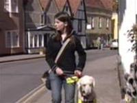 Chó thông minh giúp người bệnh