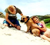 Vuốt ve giúp vật nuôi thư giãn