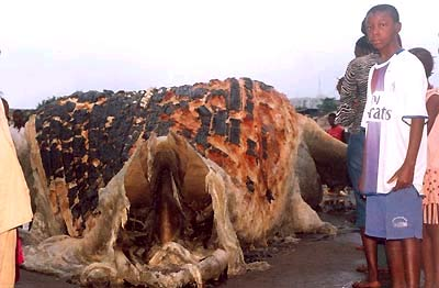 Quái vật biển mắc cạn ở Guinea