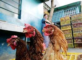 Trung Quốc: Phát hiện ổ dịch H5N1 mới