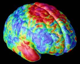 Xác lập sơ đồ trưởng thành của não