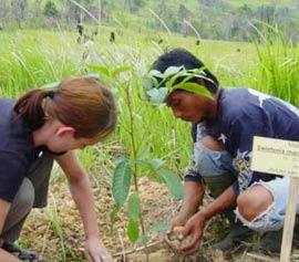 Trồng một tỷ cây xanh để chống toàn cầu ấm lên