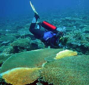 San hô có cấu tạo gene phức tạp hơn con người?