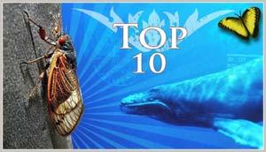 10 kiểu di cư kỳ lạ nhất của động vật