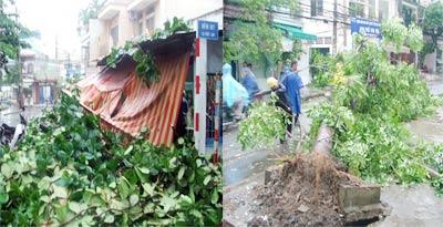 TP.HCM: Mưa lốc, đổ cây, ngập đường, cháy thiết bị điện