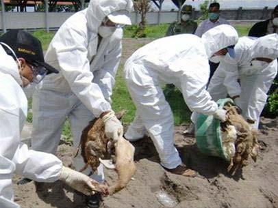 Indonesia: Ca tử vong thứ 79 vì cúm gia cầm