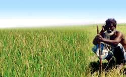 Bangladesh tạo 93 giống lúa tiết kiệm nước