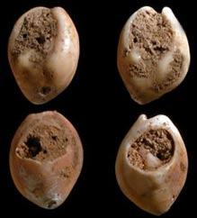 Phát hiện trang sức vỏ sò cổ nhất tại Morocco