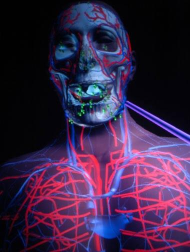 Giải phẫu sống cơ thể trong không gian ảo