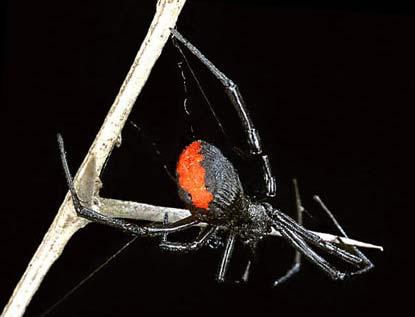 Áo giáp siêu bền từ tơ nhện