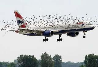 """Chim trời - nỗi kinh hoàng của """"chim sắt"""""""