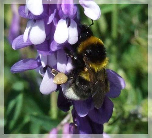 Ong cũng kén màu hoa